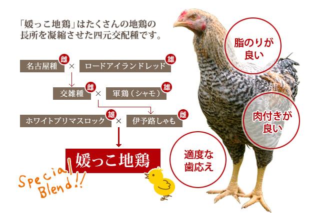 媛っこ地鶏